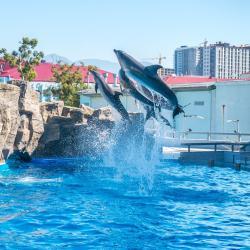 Dolphinarium, 巴统
