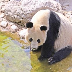 美泉宫动物园