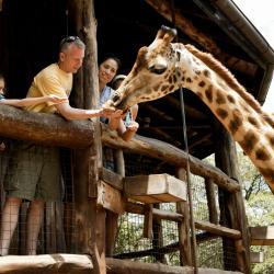 内罗毕长颈鹿中心, 内罗毕
