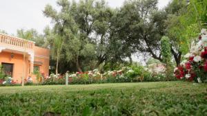 Moorish House外面的花园