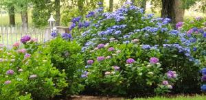 BIDACHUNA外面的花园