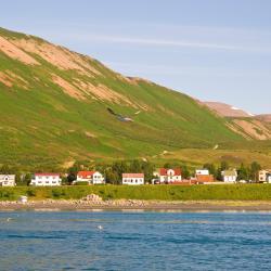 Ólafsfjörður 5家酒店