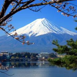 富士河口湖 270家酒店