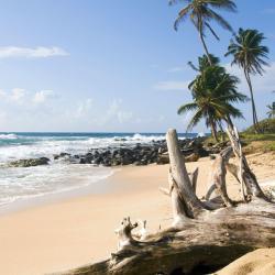 大玉米岛 15家酒店