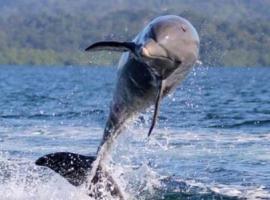 Dolphin Bay Hideaway