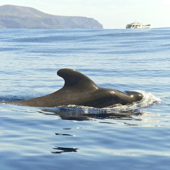 观鲸和追海豚