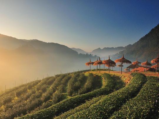 旅行灵感新发现:泰国清迈